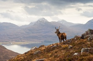 Deer stalking at Glenstrae Scottish Highlands Holiday Lodge