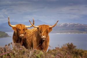 Art Nature Glenstrae holiday lodge scottish highlands